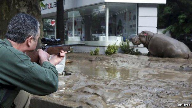 georgia flood bear
