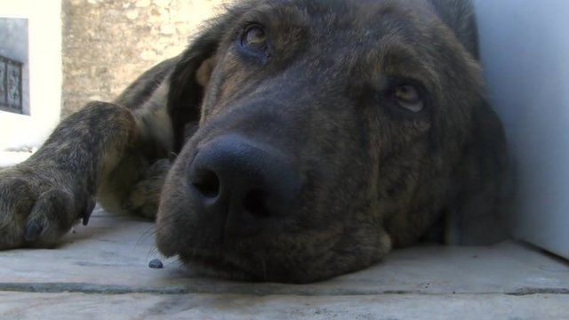 Stray dog in Greece
