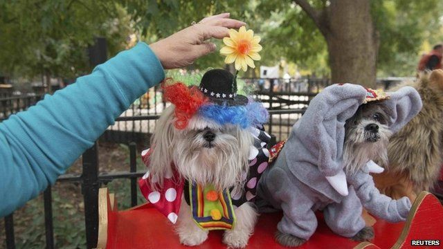 Dogs dressed as circus animals