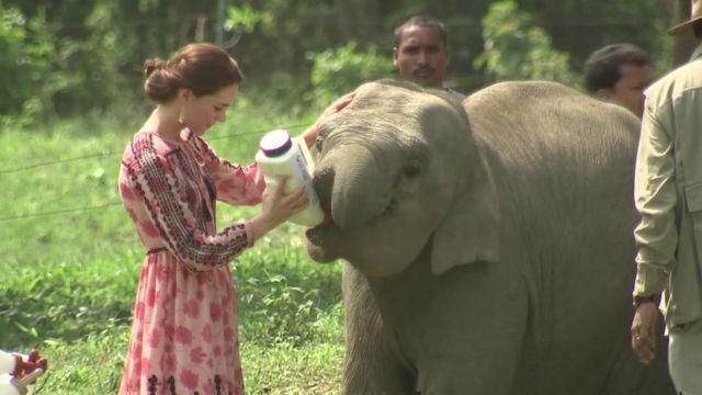 The Duchess of Cambridge feeding elephants in India