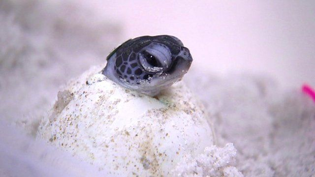 Turtle hatching from egg