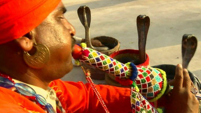 A Jogi snake charmer and three king cobra snakes