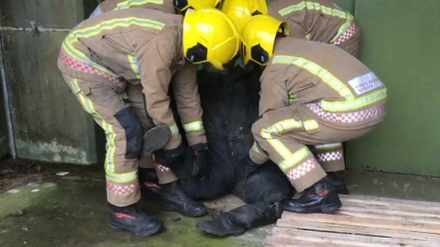 Firefighters rescue training