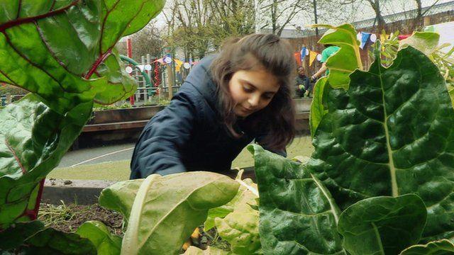 pupil gardening