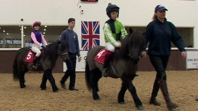Shetland ponies and riders