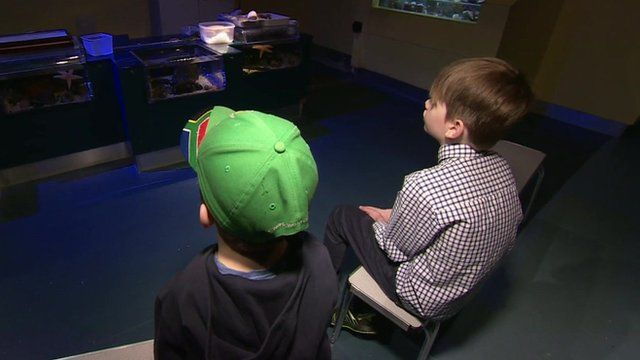 Autistic children in specialist learning zone