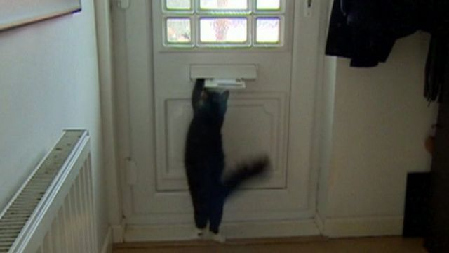 Bella the cat jumping at letterbox