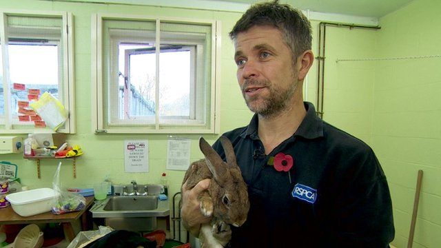RSPCA worker Lee Stewart and a rabbit