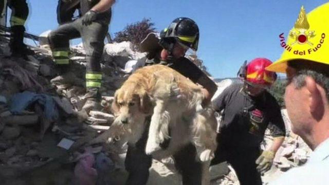 助け出した犬を抱きかかえる消防隊員