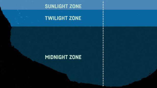 Ocean zones graphic