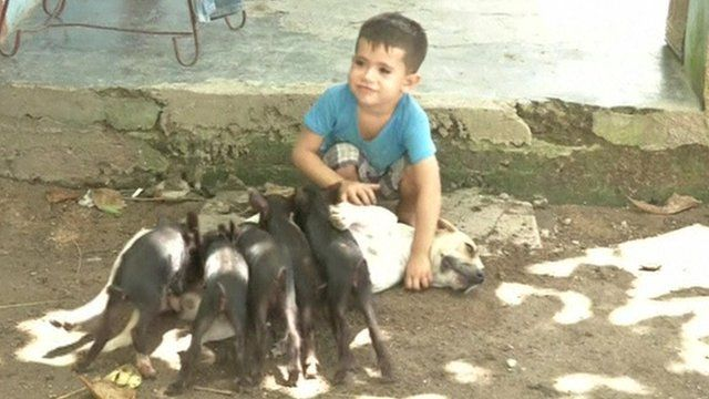 Dog nurses orphaned piglets whilst caring for six pups