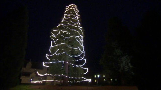 Uk's Tallest' Christmas Tree At Wakehurst Place Is Decorated Bbc