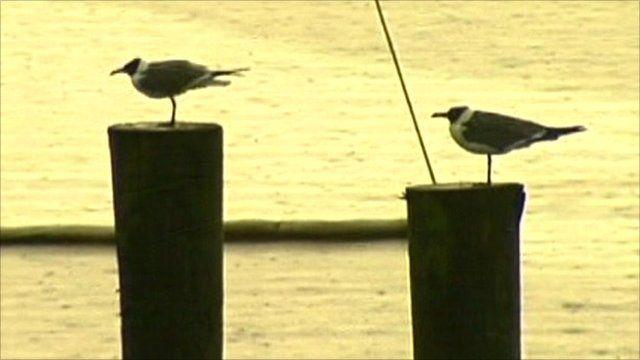 Birds in the Gulf Coast