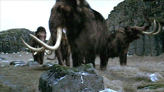 African Elephant vs. Woolly Mammoth