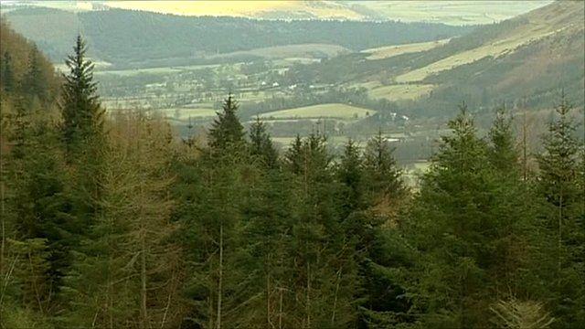 Whinlatter forest in Cumbria