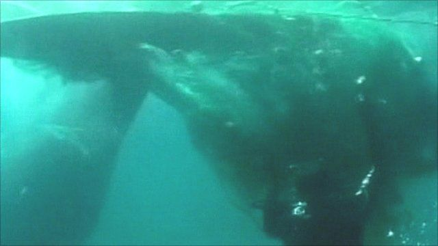 Whale's tail trapped in fishing net