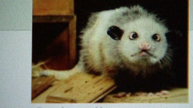 Heidi the opossum on Facebook