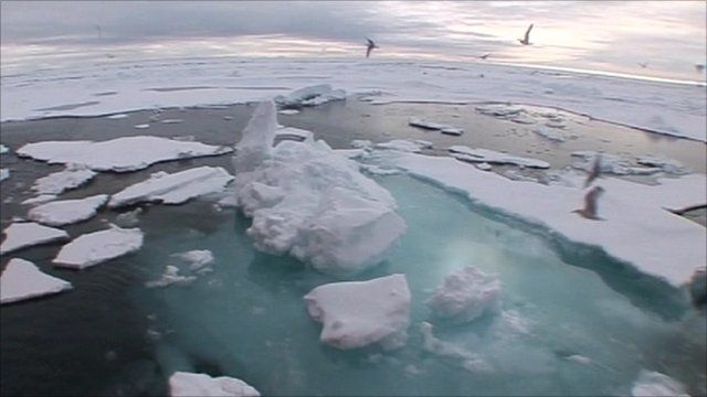 Arctic sea and ice