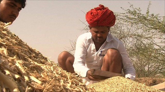 Agricultural work in rural India