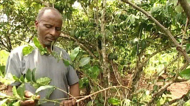 Coffee farmer Feleke Dukamo