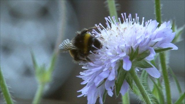 Bee in Bristol