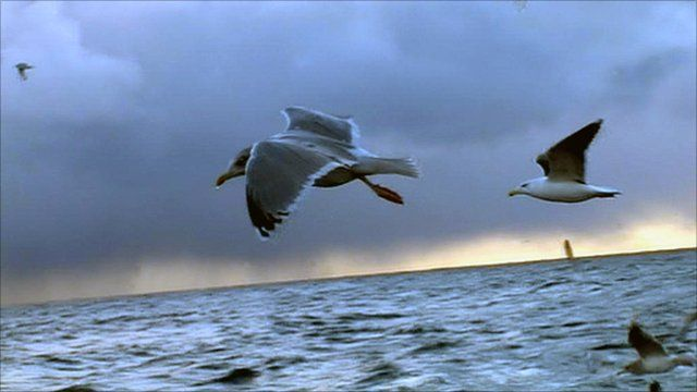 Sea birds flying over the North Sea
