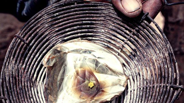 Gold found in Diabougou, Senegal