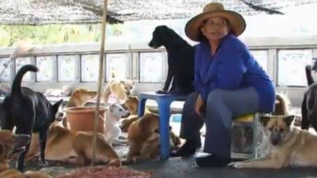 Dogs face disease after Thai floods