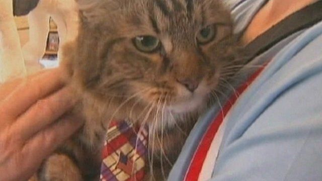 Hank the cat wears red, purple and yellow tie.