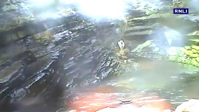 RNLI lifeboat goes to rescue a stranded calf