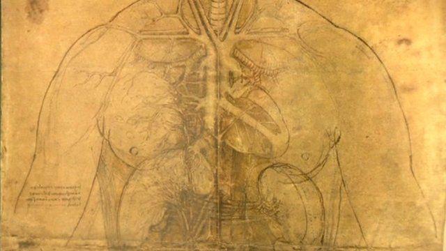 Leonardo illustration