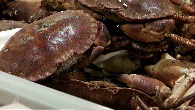 Crabs at Billingsgate market