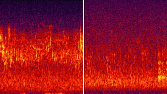 Spectrogram before and after