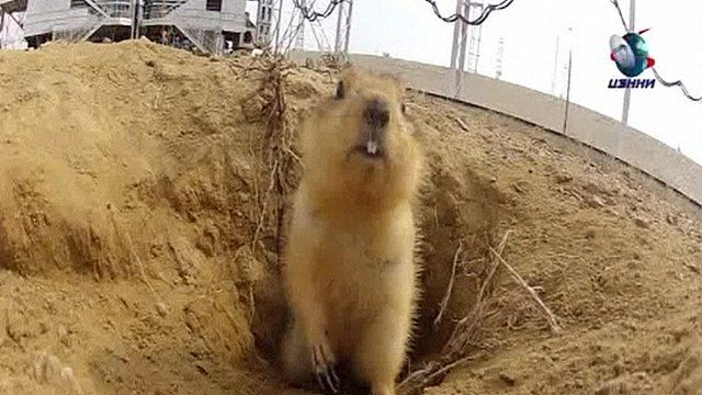 A gopher has been found living under a rocket launch-pad in Kazakhstan
