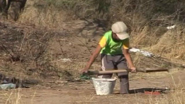 A boy clearing a field that has been sprayed with herbicides from the air