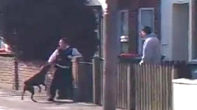 Amateur video of dog attacking police officers