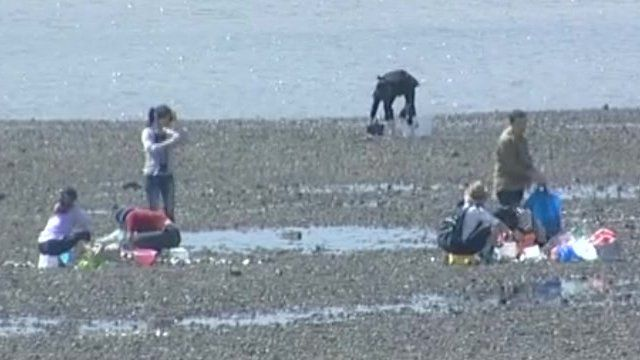 Picking oysters at Southend