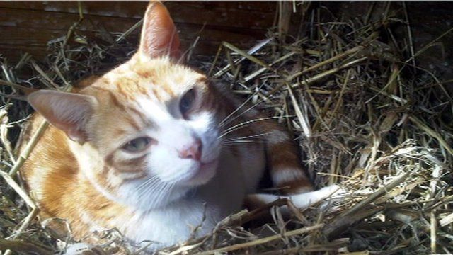 One of more than 20 cats who died with kidney failure
