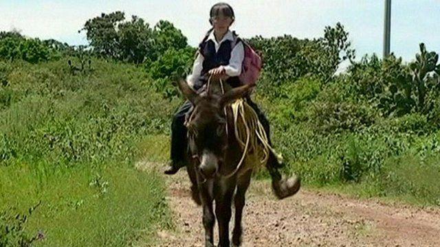 Mexican schoolgirl on a donkey