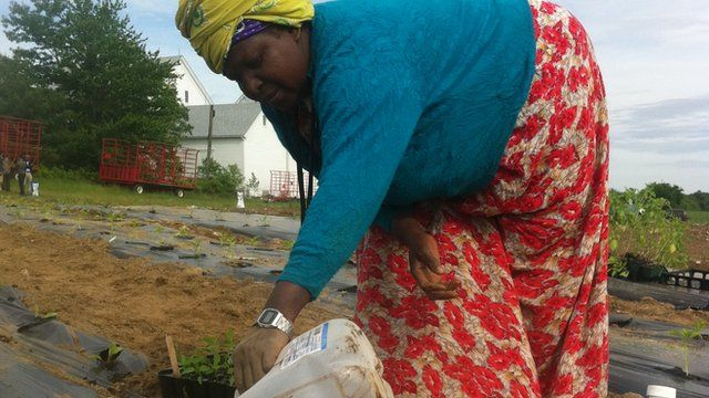 Somali Bantu farmer in Maine
