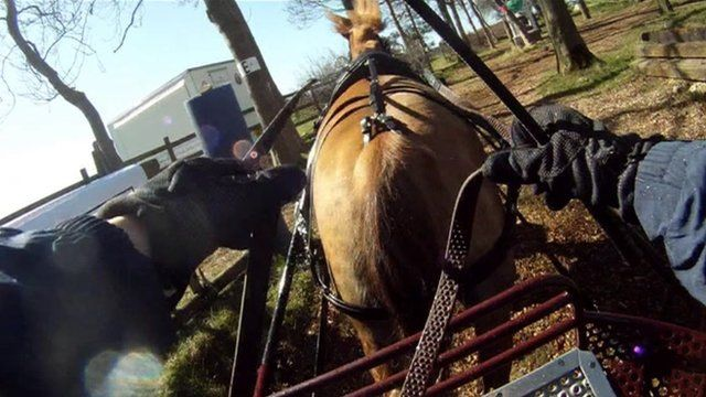 Horse driving