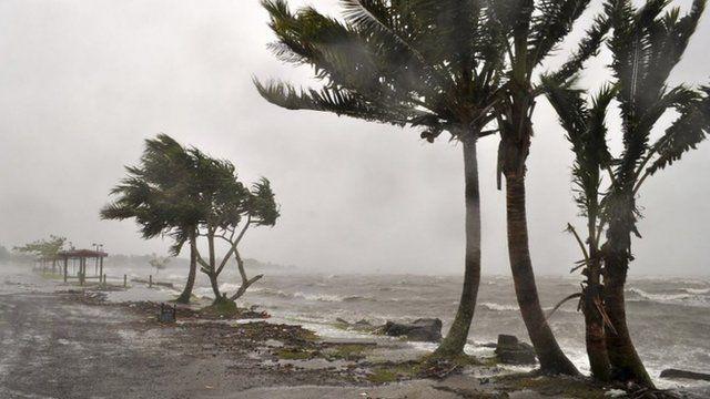 Wind lashing trees on coast