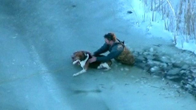 Dog being rescued from the ice
