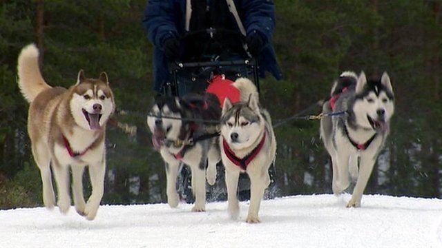 Huskies pull a sledge