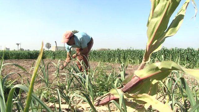 Farming by hand