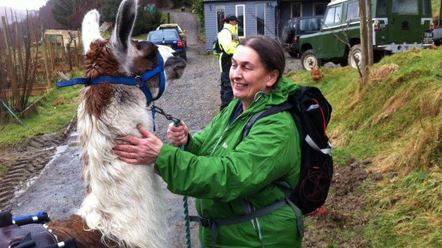 Carol Jerman with one of her llamas