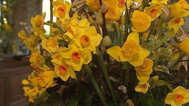 Daffodils in the church