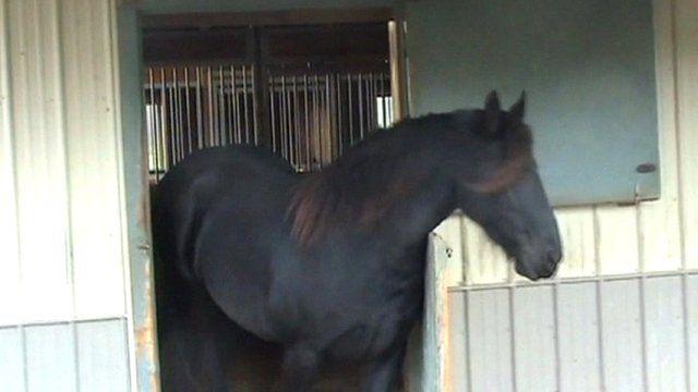 Mariska opens her stable door