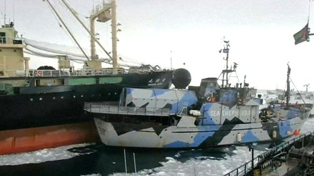 Japanese factory ship (left) and anti-whaling boat clash at sea