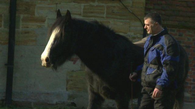 Adam and horse